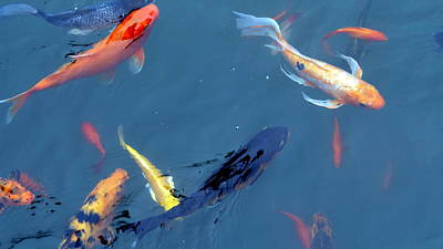 Photograph - Swimming Koi Fish by Patrick Morgan