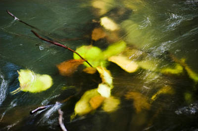 Photograph - Swimming Leaves by Mick House