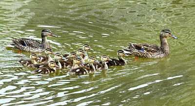 Photograph - Swimming Lesson by Carol Erikson