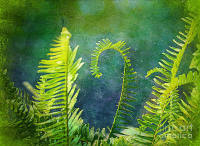 Photograph - Swirling Ferns by Judi Bagwell