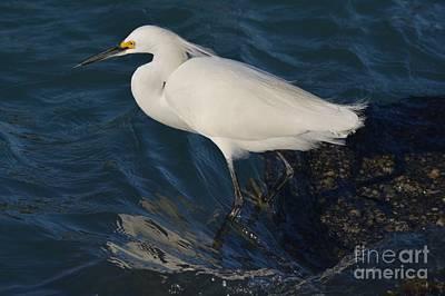 Photograph - Swirling Gulf Water Currents by Patricia Twardzik