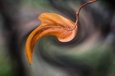 Photograph - $100 -  8x10 Metal -leaf Swirl by Tam Ryan