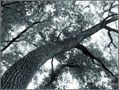 Photograph - Swirly Tree by Angie Staft
