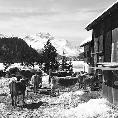 Horse Wall Art - Photograph - Snowy Springtime In St. Moritz by Reed Alexander