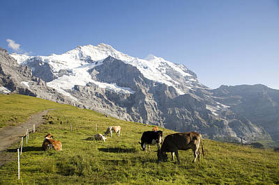 Jungfraujoch Photograph - Switzerland, Canton Bern, Berner by Tips Images