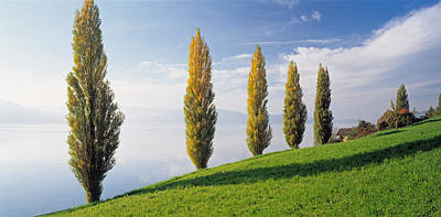 Zug Photograph - Switzerland, Lake Zug, Row Of Populus by Panoramic Images