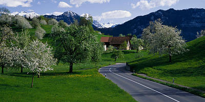 Rural Landscapes Photograph - Switzerland, Luzern, Trees, Road by Panoramic Images
