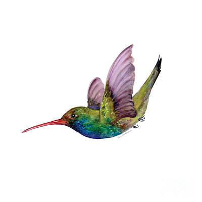 White Background Painting - Swooping Broad Billed Hummingbird by Amy Kirkpatrick