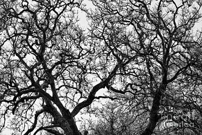 Photograph - Sycamore And Sky by Stuart Gordon