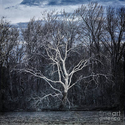Photograph - Sycamore Dreamer by Terry Rowe