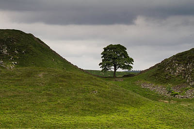 Photograph - Sycamore Gap Northumbria by Wayne Molyneux