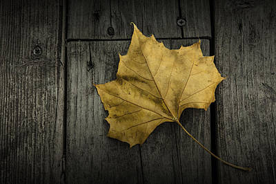 Photograph - Sycamore Leaf Fallen On A Wooden Deck by Randall Nyhof