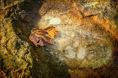 Photograph - Sycamore Leaf In Ice by Diana Boyd
