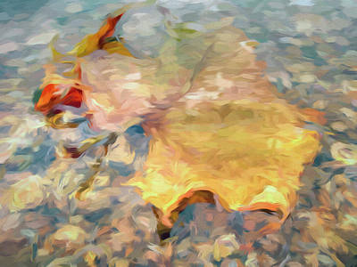 Sycamore Leaf Underwater On Potomac River Art Print