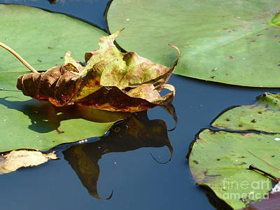 Photograph - Sycamore On Lily by Jane Ford