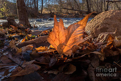 Photograph - Sycamore On Oak Creek by Marianne Jensen