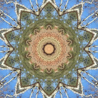 Sycamore Splendor Art Print