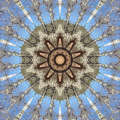 Digital Art - Sycamore Star Power by Trina Stephenson