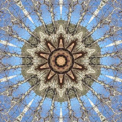 Digital Art - Sycamore Star Power by Trina Stephenson