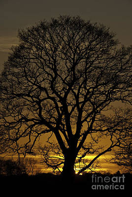 Photograph - Sycamore Sunset by James Lavott