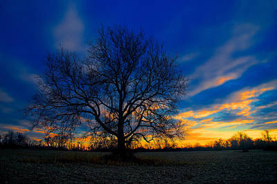 Sycamore Sunset Art Print by William Jobes