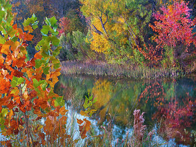 Sycamores And Willows, Inks Lake Art Print
