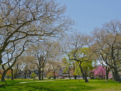 Sycamores In Spring 2 Art Print by Ellen Paull