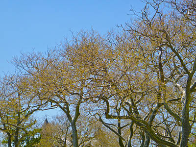 Sycamores In Spring Art Print by Ellen Paull