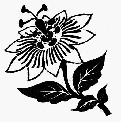 Passionflowers Drawing - Symbol Passion Flower by Granger