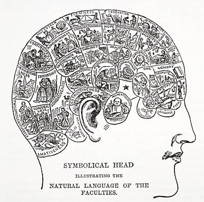 Faces Drawing - Symbolical Head Showing The Natural by English School