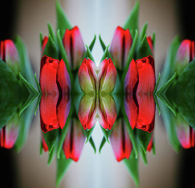 Symmetry Photograph - Symmetrical Composite Of Red Tulips by Silvia Otte