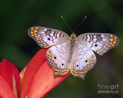 Photograph - Symmetry by Tamara Becker