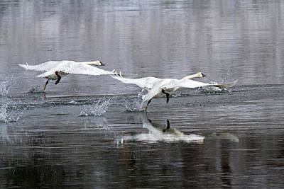 Photograph - Synchronized Take-off... by Shari Sommerfeld