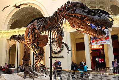 Photograph - T-rex - Chicago Field Museum by Gregory Dyer