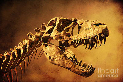 Photograph - T - Rex by Alyce Taylor