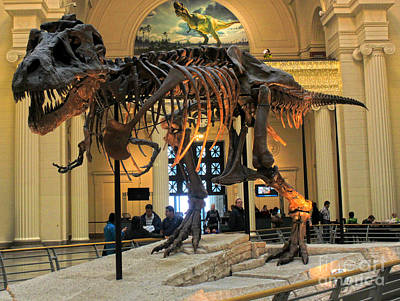 Photograph - T-rex Sue At Chicago Field Museum by Gregory Dyer