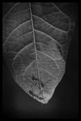Ta Pra Mok Ants Original by David Longstreath