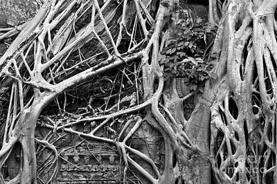 Photograph - Ta Prohm Roots And Stone 07 by Rick Piper Photography