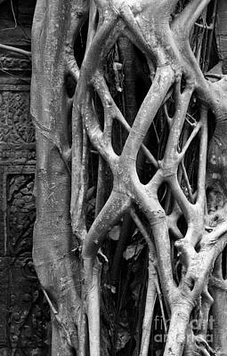 Photograph - Ta Prohm Roots And Stone 10 by Rick Piper Photography