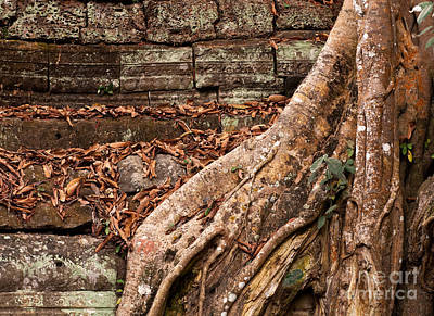 Photograph - Ta Prohm Roots And Stone 17 by Rick Piper Photography