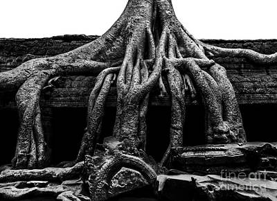 Tree Roots Photograph - Ta Prohm Ruin by Julian Cook