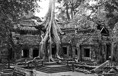 Tree Roots Photograph - Ta Prohm Temple 01 by Rick Piper Photography