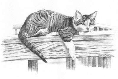 Drawing - Tabby Cat by Dustin Miller