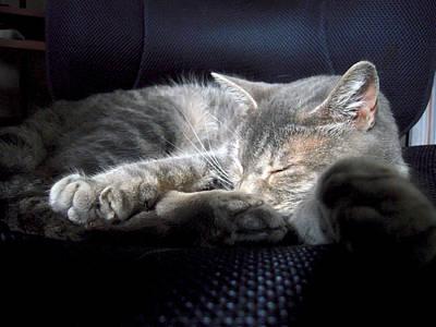 Gray Tabby Photograph - Tabby Cat Office Friend by Michele Avanti