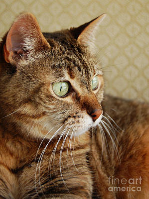 Wall Art - Photograph - Tabby Cat by Susan Montgomery
