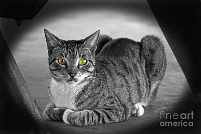 Photograph - Tabby Cat by Terri Mills