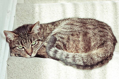 Striking Photograph - Tabby Cat by Tom Gowanlock