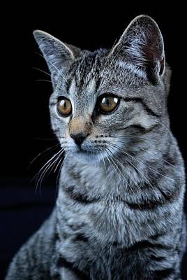 23 Hours Photograph - Tabby Kitten by Kelly Mac Neill