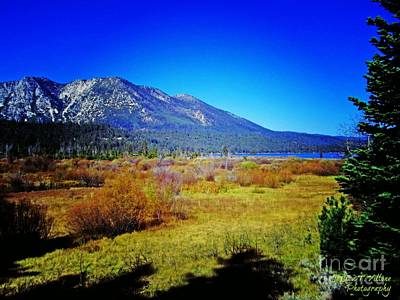 Photograph - Tahoe Area Beauty by Jessica Villone