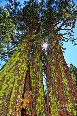 Photograph - Tahoe Trees - Lake Tahoe By Diana Sainz by Diana Raquel Sainz